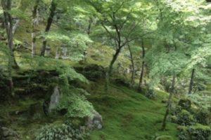 光明禅寺、太宰府、苔寺、紅葉、枯山水